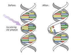 UVC Wirkung DNA RNA
